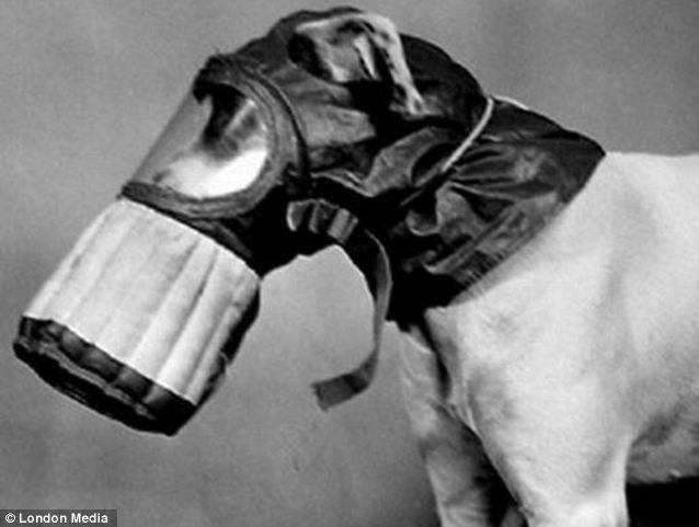 cachorros-mascaras-gas-guerra-mundial