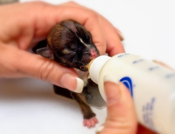 Filhotes caninos e o leite materno