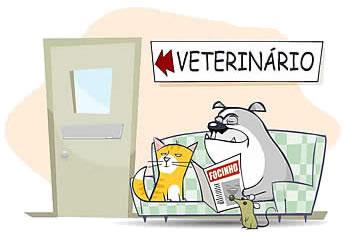 Leve o seu cão ao veterinário! Foto: Reprodução/ Google Images