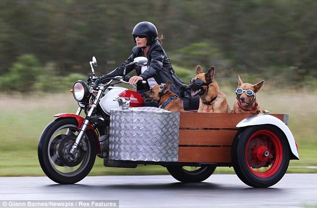 Minha Motoca Cachorros-passeio-sidecar