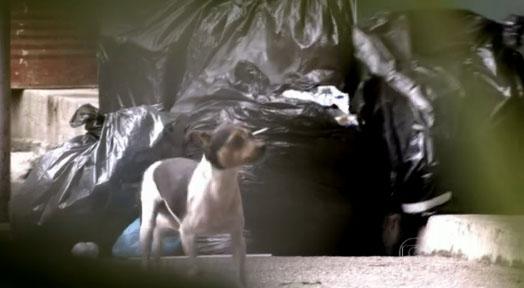 amor a vida cachorro adocao bernarda 1 Walcyr Carrasco emociona ao tocar sobre o assunto de abandono e adoção de animais