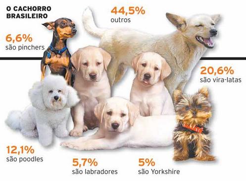 racas mais populares brasil Brasil, um país canino. Raças de cachorro mais populares no Brasil