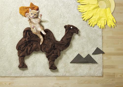 hills comercial cachorro gato 01 A vida é uma aventura é o conceito do comercial da Hills