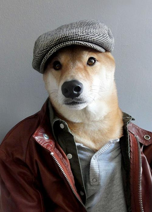 Tumblr Menswear Dog Tem Shiba Inu Posando Para Look Do Dia