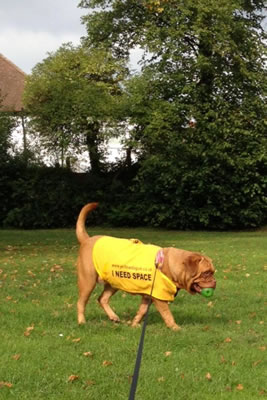 The Official Yellow Dog UK-01