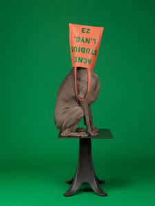 William-Wegman-fotografia-weimaraner-02