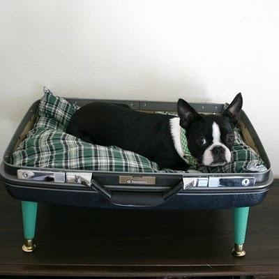 boas-ideias-cachorro (12)