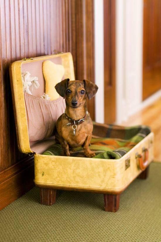 boas-ideias-cachorro (15)