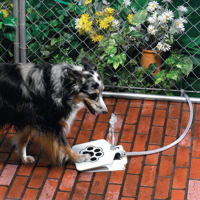 boas-ideias-cachorro (35)