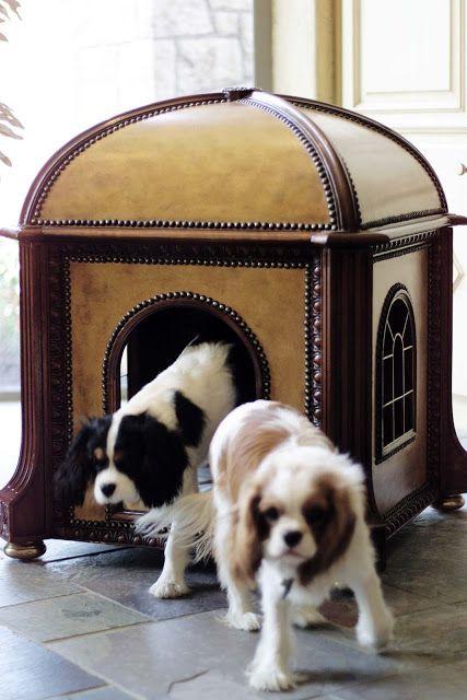 boas-ideias-cachorro (45)