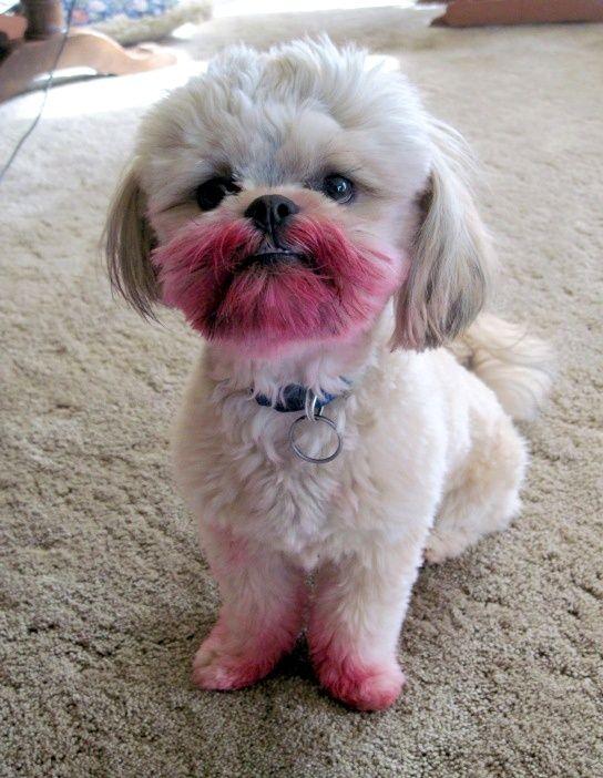 cachorro-batom