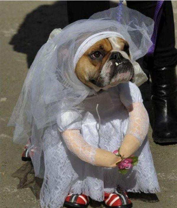 cachorro-noiva