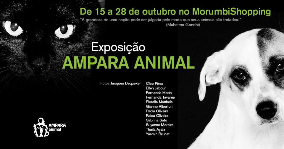 Cartaz da exposição. Foto: Reprodução/ Facebook Ampara Animal