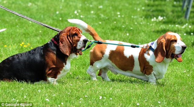 Cães na Alemanha estão sendo prejudicados com excrementos humanos em parques. Foto: Reprodução/Daiy Mail
