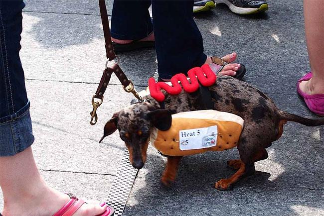 corrida-dachshund-cincinnati-01