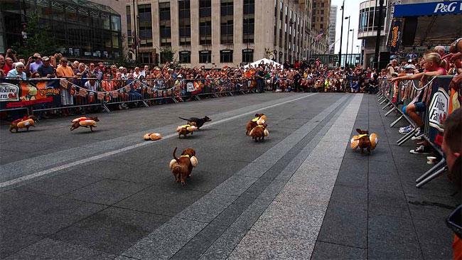 corrida-dachshund-cincinnati-02