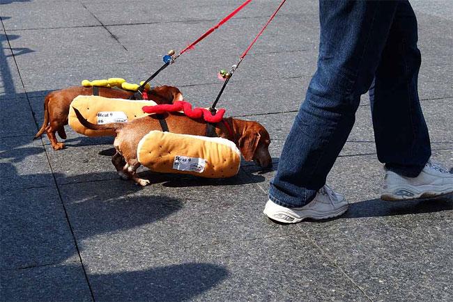 corrida-dachshund-cincinnati-06
