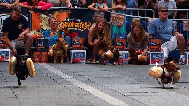 corrida-dachshund-cincinnati-07