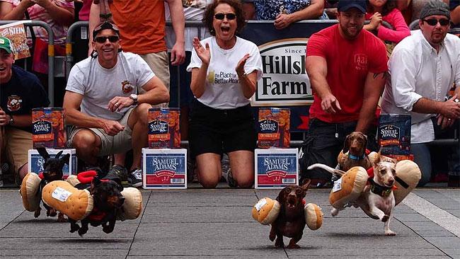 corrida-dachshund-cincinnati-09