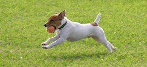 Dicas para cachorros saudáveis. Foto: Reprodução / Google