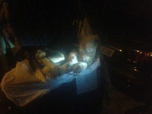 Beagle congelado em nitrogênio líquido. Foto: Reprodução / Facebook