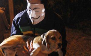 Beagle é resgatado por ativistas. Foto: Reprodução / Facebook