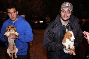 Beagles resgatados do Instituto Royal em São Roque, SP. Foto: Edison Temoteo/Futura Press/Estadão Conteúdo