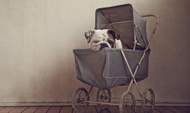 serena-hodson-fotografia-cachorros-01