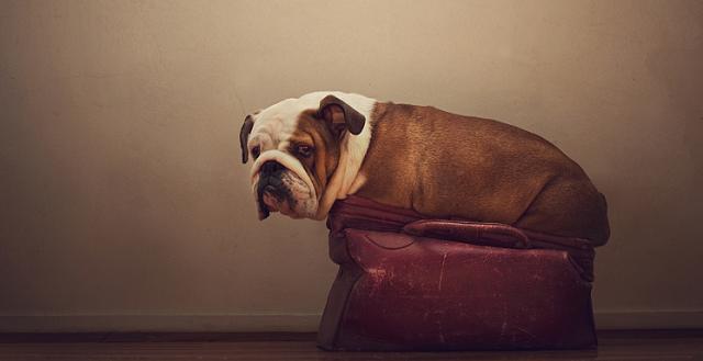 serena-hodson-fotografia-cachorros-02