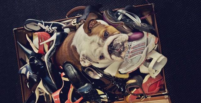 serena-hodson-fotografia-cachorros-03
