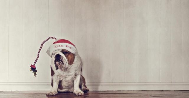 serena-hodson-fotografia-cachorros-04