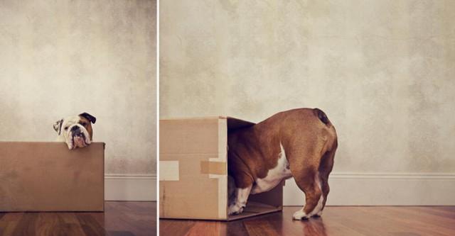 serena-hodson-fotografia-cachorros-05