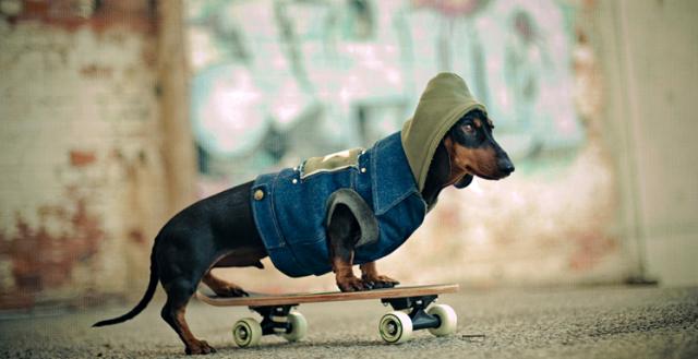 serena-hodson-fotografia-cachorros-06