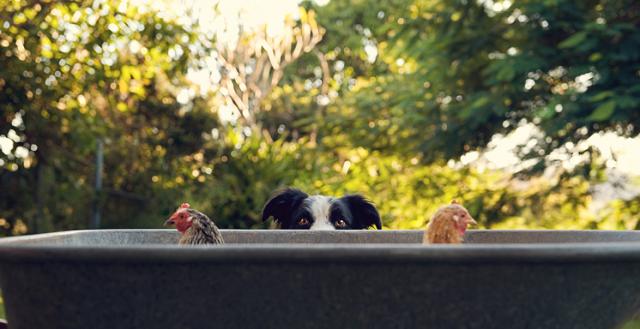 serena-hodson-fotografia-cachorros-09