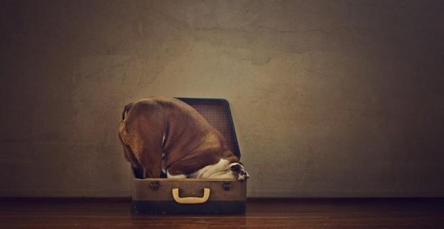 serena-hodson-fotografia-cachorros-10