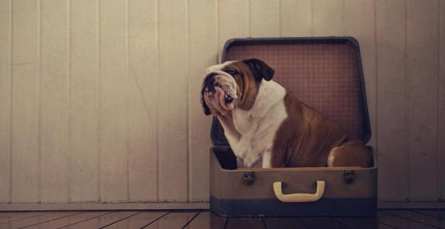 serena-hodson-fotografia-cachorros-11