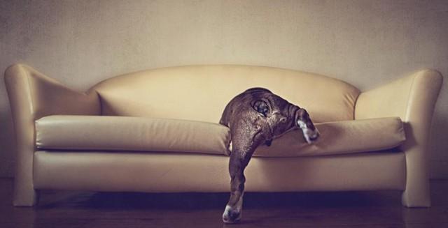 serena-hodson-fotografia-cachorros-13