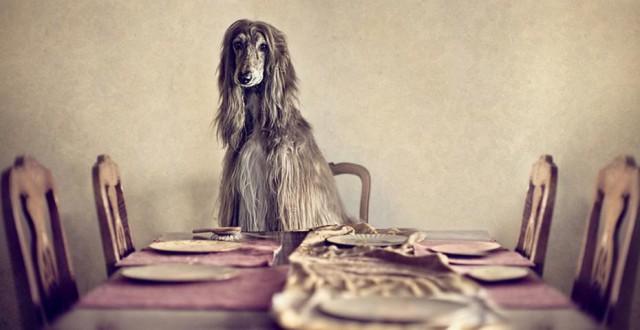 serena-hodson-fotografia-cachorros-14