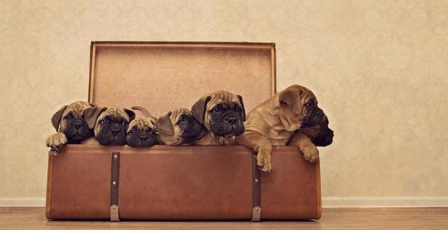 serena-hodson-fotografia-cachorros-15