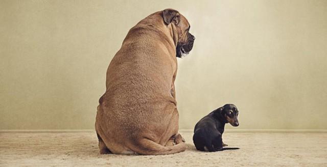 serena-hodson-fotografia-cachorros-17