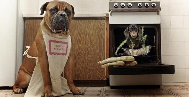 serena-hodson-fotografia-cachorros-18
