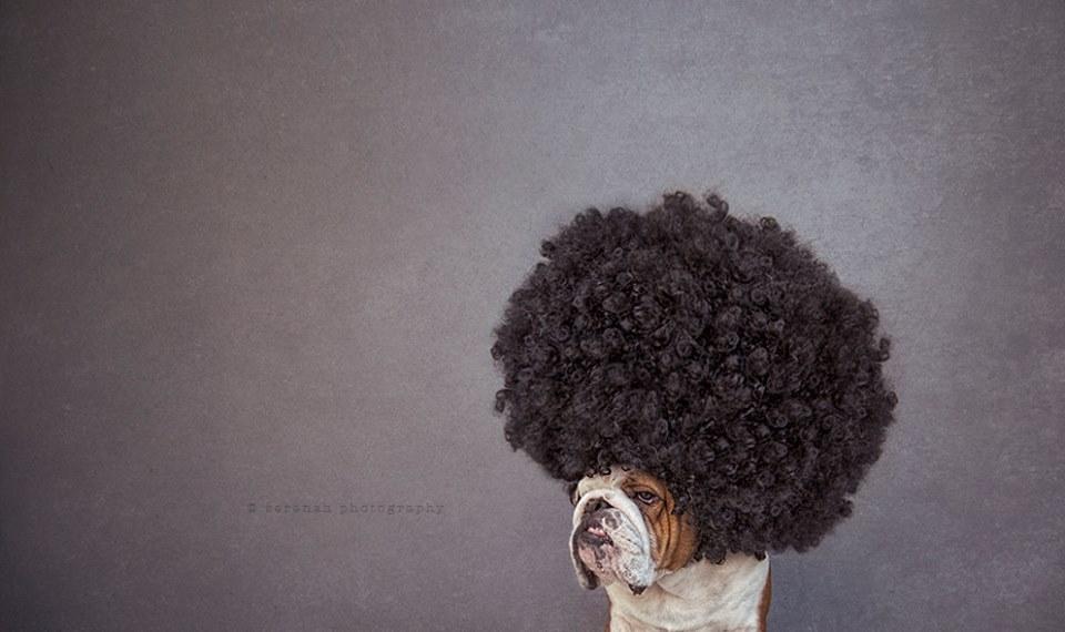 serena-hodson-fotografia-cachorros-19