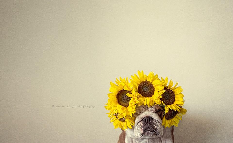 serena-hodson-fotografia-cachorros-20