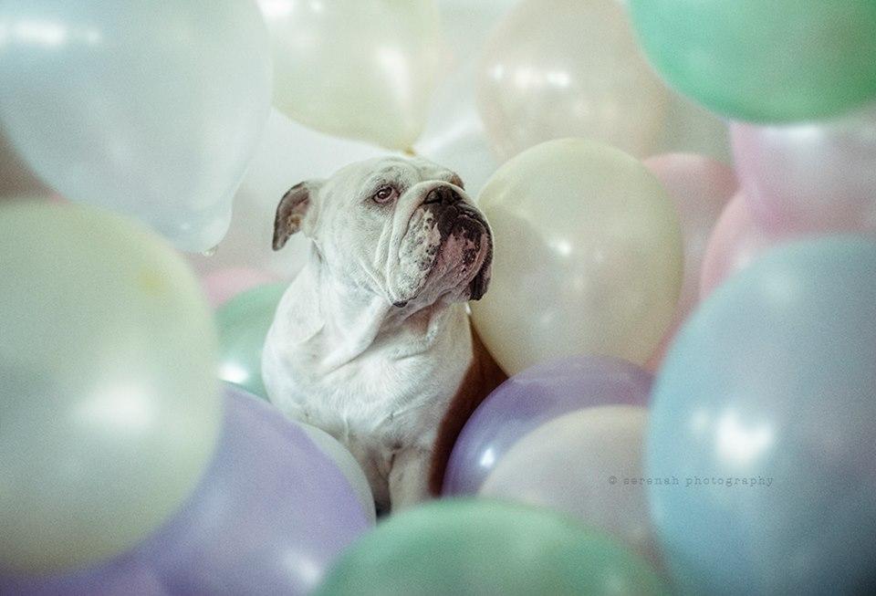 serena-hodson-fotografia-cachorros-22