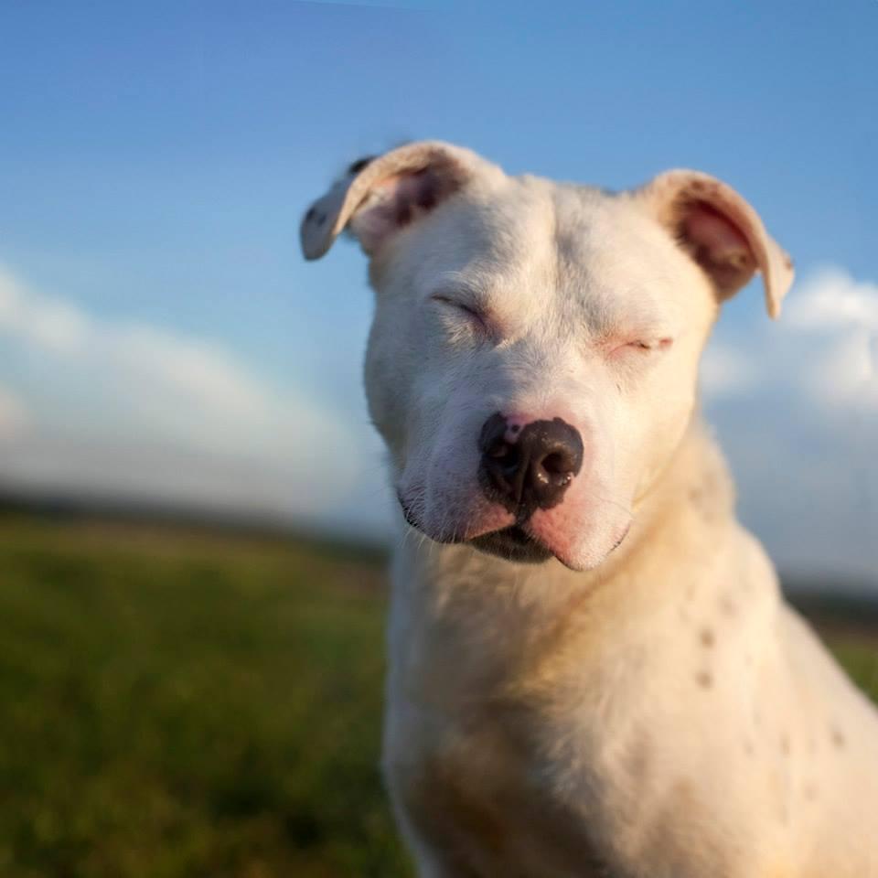 Shannon-Johnstone-landfill-projeto-fotografia-cachorros-01