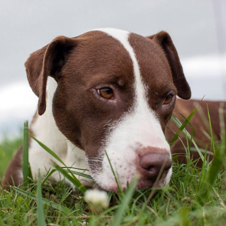 Shannon-Johnstone-landfill-projeto-fotografia-cachorros-02