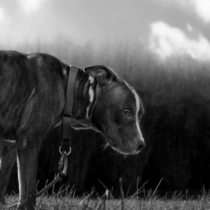 Shannon-Johnstone-landfill-projeto-fotografia-cachorros-03