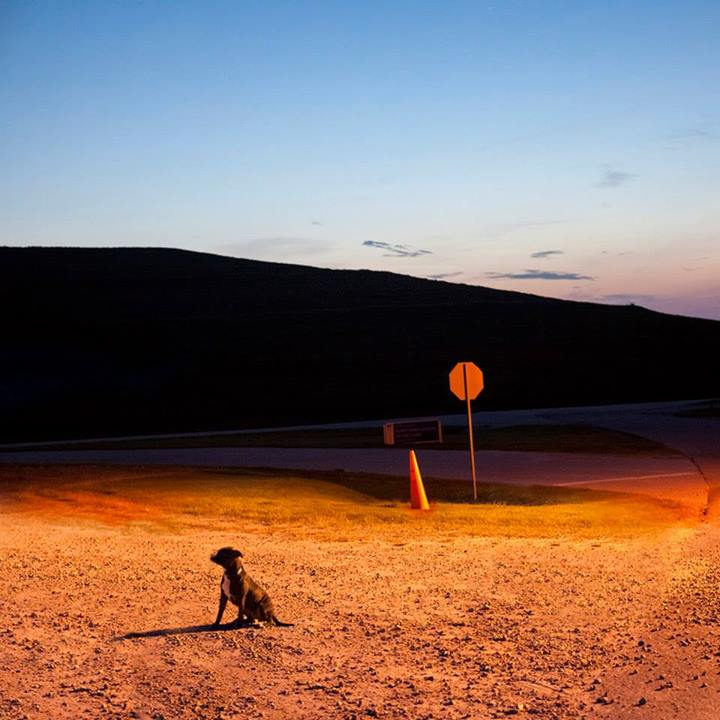 Shannon-Johnstone-landfill-projeto-fotografia-cachorros-04