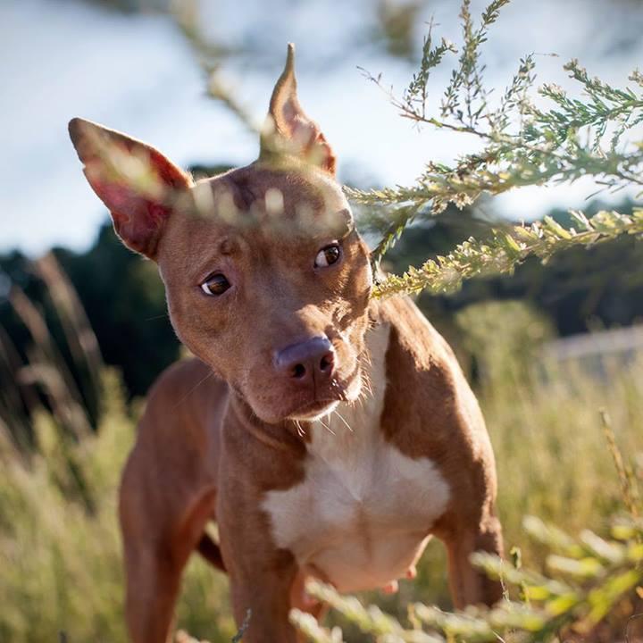 Shannon-Johnstone-landfill-projeto-fotografia-cachorros-05