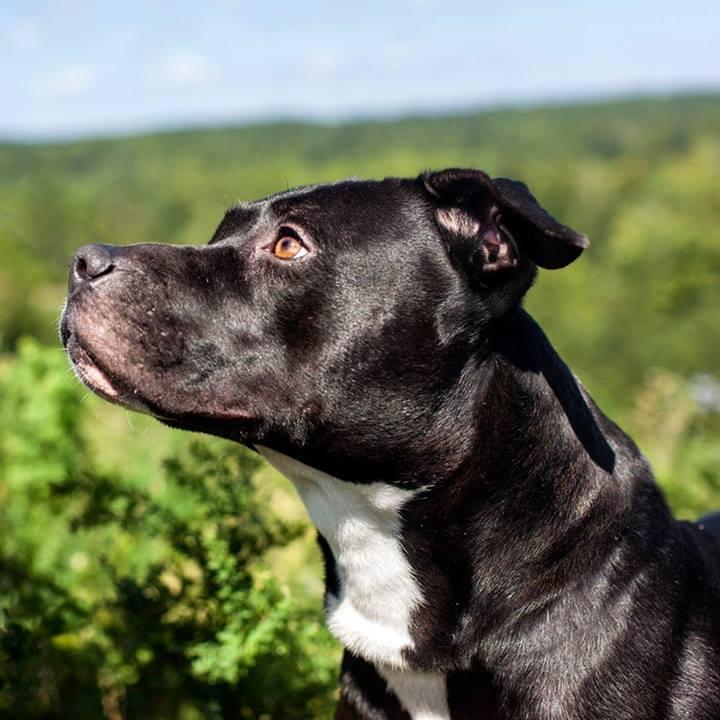 Shannon-Johnstone-landfill-projeto-fotografia-cachorros-06